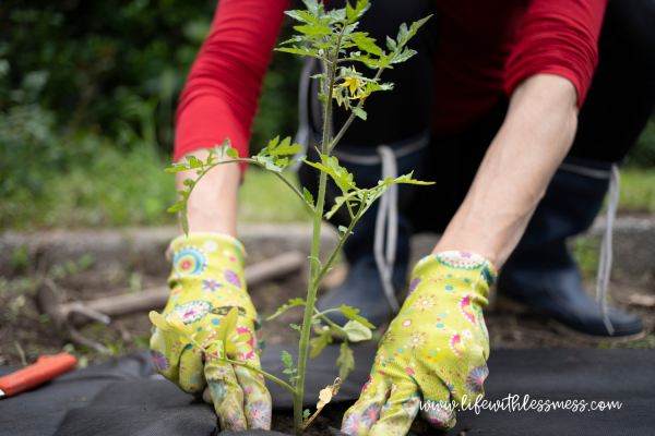 Sometimes it's easier to buy plants than to grow them from seeds in your backyard garden.